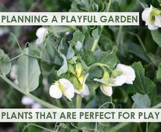 Including plants in your garden that are suitable for kids to use in their play is a great way to encourage them to be outside - playing, interacting and learning with nature.