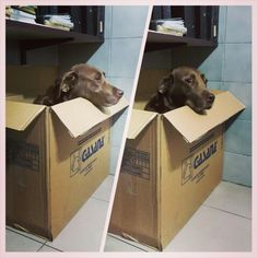 Dogs special delivery