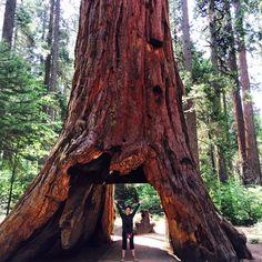 calaveras big trees state park!