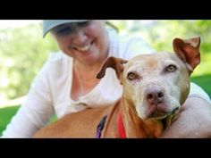 Former Victim of Dog Fighting is Adopted - One of the dogs rescued from Michael Vick's dog-fighting ring has been adopted from the Best Friends Animal Shelter in Utah. Little Red, a pit bull, now lives on six acres of fenced property in the Midwest with her new owner.