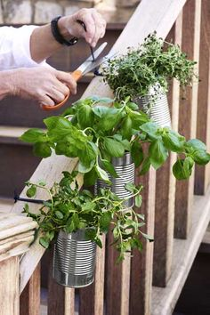 Make a hanging herb garden with a zip tie: Drill drainage holes in a tin can and a hole near the top; fill the can with soil and herbs. Thread a zip tie through the top hole and fasten the can around a railing.