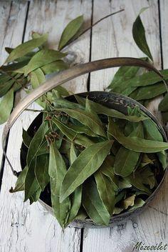 Сухой лавровый лист. © Mezeselet (http://mezeselet.blogspot.ru/).