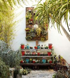 Collections are often thought of as high-end or expensive, but a simple gathering of plants in miniature containers can be a great focal point for a backyard. Here, this plain shelf provides a good spot for a low-cost stockpile of succulents and cactus plants.