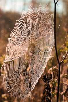Spider web by Taija Oksanen on 500px ... how AMAZING ... 'n we can't duplicate what a lil spider can do so naturally :)