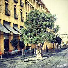 LEBANON, BEIRUT, OLD OLIVE TREE FOR DECORATION, EXPENSIVE