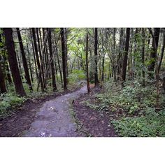 【koh_17】さんのInstagramをピンしています。 《Forest Long time no see. I went to a mountain in Fukushima for about 2 weeks to work. 森 お久しぶりです。 諸用で二週間くらい山に行ってました。 #japan #fukushima #bandai #kogen  #mountain #forest #nature #woods #green #trail #福島 #山 #森 #自然 #木 #登山道 #緑 #ぴんぼけ #軽装で登山 #ダメゼッタイ #熊注意 #笑えない》