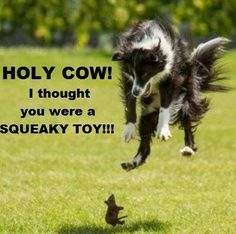 too funny my dog would freak out too