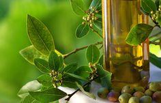 Nettoyage du foie - huile d'olive à jeun - AltheaProvence