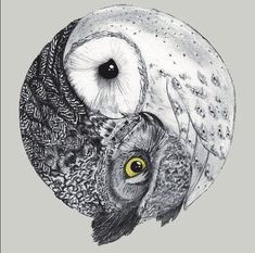An Australian Barn owl and Tawny Frogmouth. Yin and Yang with a twist!