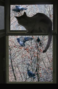 """""""Opie and Mittens Go Bird Watching"""" by Nancy S. Crazy Cat Lady, Crazy Cats, Big Cats, Cool Cats, Cats And Kittens, Kitty Cats, Animals And Pets, Cute Animals, Gato Animal"""