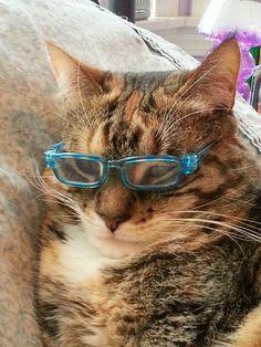 Scholarly kitty