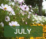 Jobs in the garden - July