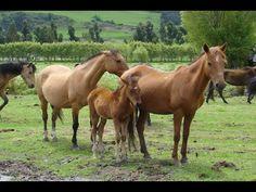 Características Generales del Cuidado y Manejo de Equinos - TvAgro por J...