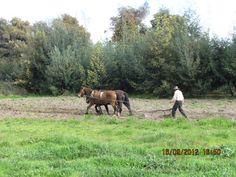 granjero arando/ farmer working...ninguno que pone la mano en el arado y mira hacia atrás es digno de mí (Jesús)