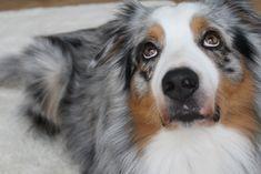 Yoga Dog #dog #hund #hundeliebe #yogadog #kuschelmatte Corgi, Pets, Animals, Animaux, Corgis, Animal, Animales, Animais