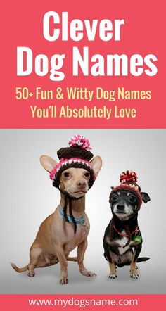 Super Clever Dog Names Are you ready to LOL? These clever dog names are fun, witty and doggone hilarious.Are you ready to LOL? These clever dog names are fun, witty and doggone hilarious. Punny Dog Names, Girl Dog Names Unique, Puppies Names Female, Pet Names For Dogs, Small Dog Names, Dogs Names List, Cute Names, Awesome Dog Names, Onions