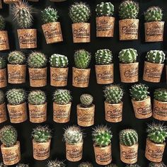 Magazine on Cactus by cactusira :) Cacti And Succulents, Planting Succulents, Cactus Plants, Planting Flowers, Cactus Pot, Cactus Flower, Flower Cafe, Air Plants, Indoor Plants