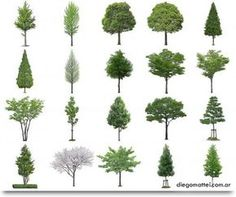 Photoshop Tree and Bush Files section render Architecture Graphics, Architecture Drawings, Landscape Architecture, Landscape Design, Architecture Design, Landscape Drawings, Parcs, Trees To Plant, How To Plan