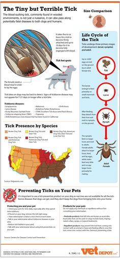 The Tiny but Terrible Tick - Infographic - Dog