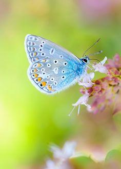 in his own little world...bokeh macro butterfly