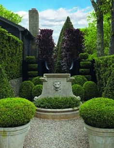 small courtyard, no grass-fabulous topiary planters