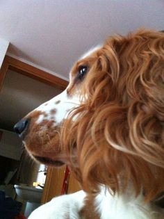 Ti aspetto... Torna che ti aspetto. Questo rende un cane il tuo cane. La certezza che gli mancherai che tu sia uscito per una giornata intera o solo un minuto...