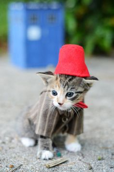 Kittens Play Dress-Up to Find Forever Homes. Dr. Who by photographer Wendy Robbins.
