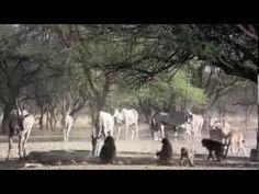 The Okonjima Nature Reserve