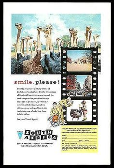 Ostriches Ostrich Oudtshoorn South Africa 1958 Tourism Ad smile, please!