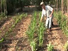Vegetable Garden With Drip Irrigation