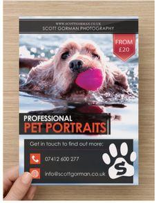 Scott Gorman Photography - Pet Portraits Flyer