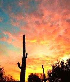 Saguaro Sunset | Tucson | Arizona | photo via IG by @lindsayl3