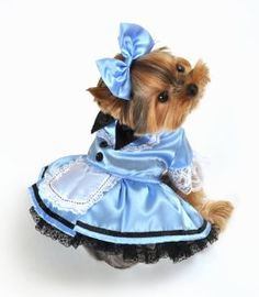 Two piece fantasy Alice dog costume, includes collared light blue dress with black bow tie and button detail, lace apron & sleeves, attached lace petticoat, and bow headpiece. Easy to wear front closure. Pet Halloween Costumes, Pet Costumes, Dog Halloween, Halloween Tricks, Yorkies, Cat Alice, Alice Costume, Puppy Costume, Alice In Wonderland Costume