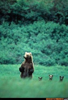 Mama bear & baby bears
