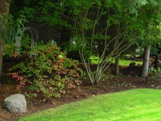 10 Trees That Require Little Growing Space ~ Bees and Roses Dwarf Trees For Landscaping, Front House Landscaping, Backyard Walkway, Backyard Landscaping, Trees For Front Yard, Front Yards, Drought Tolerant Trees, Fringe Tree, Myrtle Tree