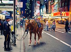 Wild mustangs trotting into NYPD mounted unit ranks Cool Photos, Beautiful Pictures, New York Police, New York Pictures, My Kind Of Town, Wild Mustangs, Equine Photography, Street Photography, Lady And Gentlemen