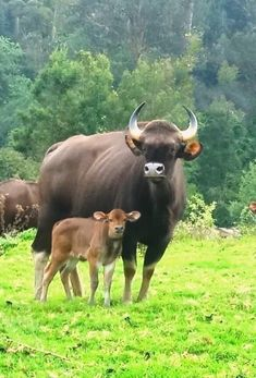 All Animals Pictures, Cute Pictures, Wild Animals, Cute Baby Animals, Wildlife Of India, Arts Integration, Social Art, Cows, Cattle
