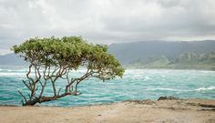 Laʻie Point State Wayside, Oahu, Hawaii [5471x3136] #nature and Science