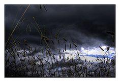 Storm Grass