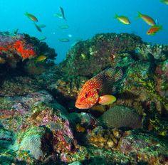 15.-Coral-Hind-Grouper.jpg 888×874 pixels