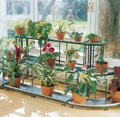 Indoor Gardening  How to grow beautiful plants inside your home
