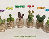 Boo-Boo Plant - Natures best gift - miniature pet plant living inside a capsule
