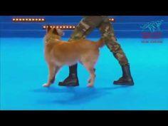 Когда она лежала на сцене с собакой, судьи не ожидали увидеть первокласс...