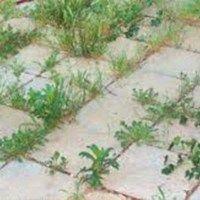 9 mód, hogy sose nőjön több gyom a kertedben! Zseniális! My Secret Garden, Garden Ornaments, Succulents Garden, Vegetable Garden, Garden Art, Organic Gardening, Pergola, Backyard, Flowers