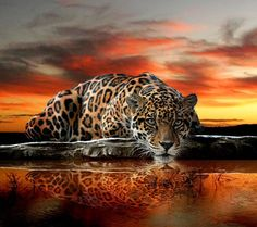 Resting in the Sunset by the water reflection