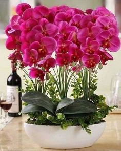 Orchids make a beautiful centerpiece when entertaining: Grow care and maintenance of orchid plants: Exotic Flowers, Tropical Flowers, Amazing Flowers, Diy Flowers, Beautiful Flowers, Orchids Garden, Orchid Plants, Flowers Garden, Planting Flowers