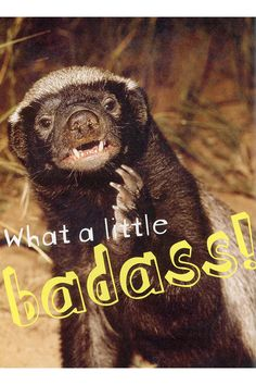 Honey Badger Don't Care By Randall