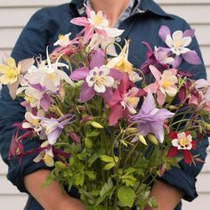 McKana Giants Mix - Columbine Seed | Johnny's Selected Seeds Bulb Flowers, Large Flowers, Deer Resistant Flowers, Great Cuts, Bouquet, How To Attract Hummingbirds, Hardy Plants, Flowers Perennials, Flower Farm