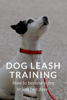 Dog Leash Training: Here's how it works! Your dog's judged on how well he behaves on a leash. Leash training can be stressful if you don't know where to begin. Want to impress other pet owners? Show how behaved is your dog when you two walks side by side. Puppy Training Tips, Training Your Dog, Potty Training, Puppy Leash Training, Training Quotes, Agility Training, Training Schedule, Training Collar, Crate Training