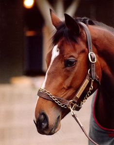 Go for Wand - champion filly of 1990.  She broke down in the 1990 Breeders Cup Distaff at Belmont Park and had to be euthanized.  She was later buried in the infield of Saratoga Race Course, the site of her biggest victory in the Alabama Stakes.